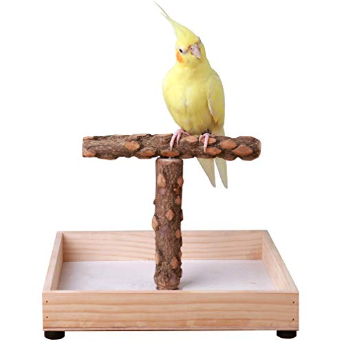 KINTOR Bird Stand Tabletop,Portable Tee Stand, Parrot Play Stand Perch Gym for Small Medium Parrot