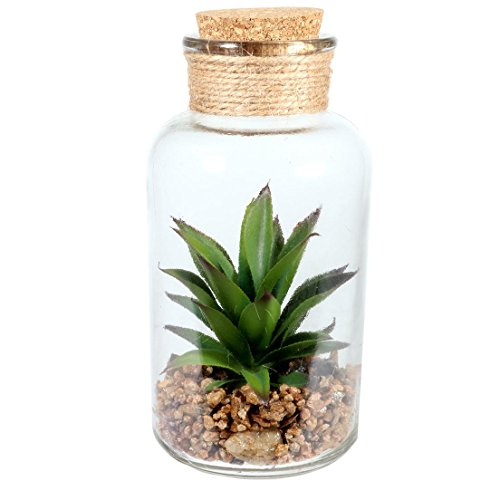 DEI 8 Inches Height Succulents in Glass Jar Large Tabletop Decor]()