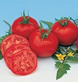 David's Garden Seeds Tomato Slicing Moskvich D756A (Red) 50 Organic Heirloom Seeds