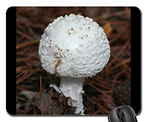 (Mouse Pad - Mushroom Amanita Muscaria VAR Alba Fungi Toadstool)
