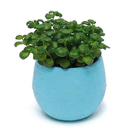 Flower Pots, Windspeed Decorative Mini Flower Pots Plastic Plant Planter Saucer Tray for Home Garden Decor Blue