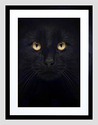 - Photo Composition Close UP PET Black CAT FACE Eyes Framed Art Print B12X8398