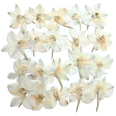Pressed Flowers Natural Dried White Delphinium 20pcs Amazon