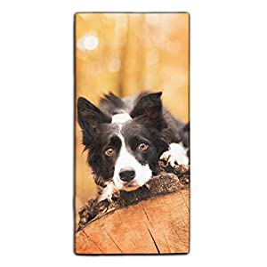"""Forest Border Collie Printed Microfiber Cleaning Cloth/Guest Hand Towel for Drawing Room and car 11.8 × 27.5"""" 1"""
