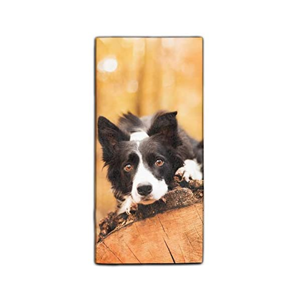 "Forest Border Collie Printed Microfiber Cleaning Cloth/Guest Hand Towel for Drawing Room and car 11.8 × 27.5"" 1"