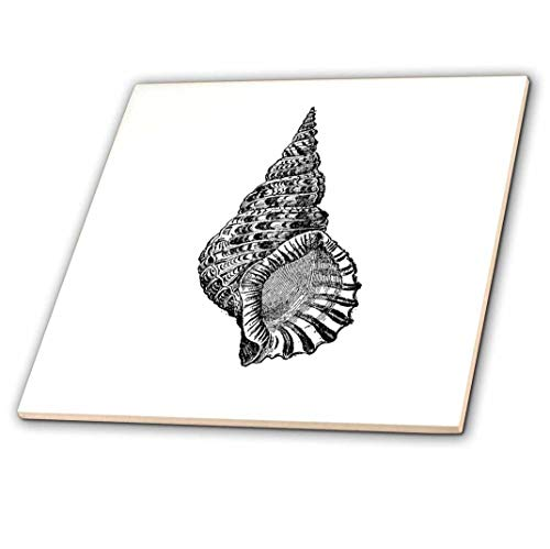 3dRose ct_164979_3 Conical Seashell. Black and White Beach Sea Shell Spiral Illustration-Ceramic Tile, 8-Inch