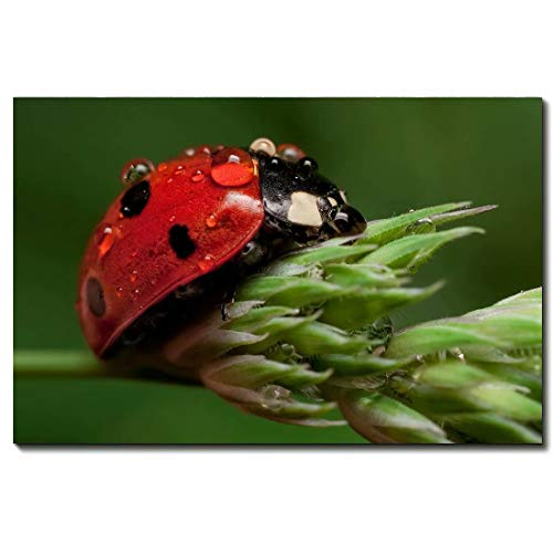 Animal Contemporary Wall Art Ladybug Oil Painting Printed On Canvas Romantic Picture Framed Artwork Prints For Walls Decor,12 * 18inch(30 * 45cm)