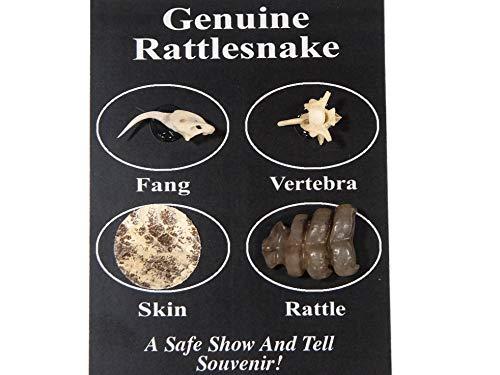 Rattlesnake Skin - Trainers4Me