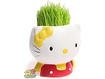 Super Kitty maceta amarilla: Amazon.es: Jardín