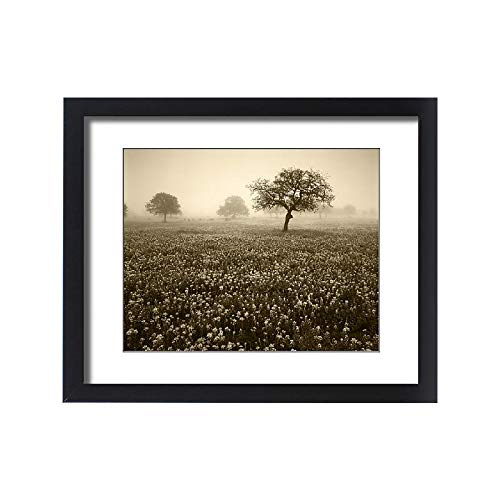 Media Storehouse Framed 20x16 Print of USA, Texas, Hill Country, View of Texas Paintbrush and Bluebonnets (11183663)