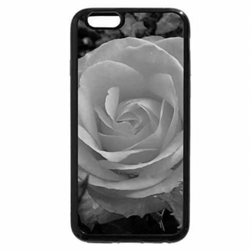 iPhone 6S Plus Case, iPhone 6 Plus Case (Black & White) - Tequila Sunrise Rose