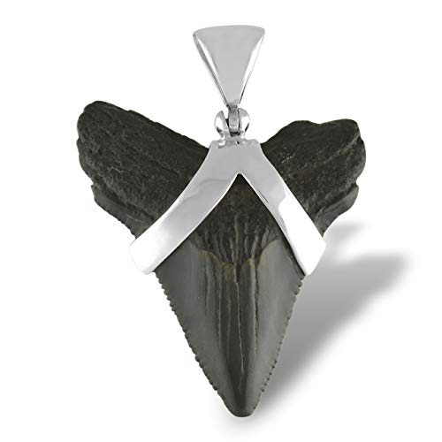 Sterling Silver Tooth - Fossil Shark Tooth Sterling Silver Pendant