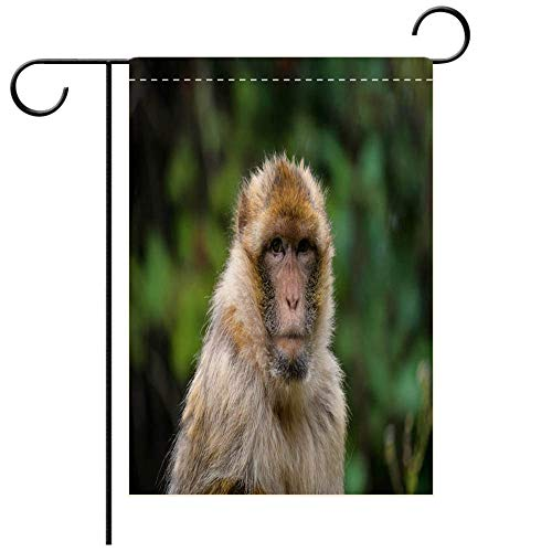 BEICICI Garden Flag Double-Sided Printing,Barbary Macaque Best for Party Yard and Home Outdoor Decor