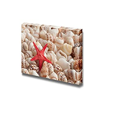 Canvas Prints Wall Art - Closeup of Composition of Exotic Shells | Modern Wall Decor/Home Decoration Stretched Gallery Canvas Wrap Giclee Print & Ready to Hang - 24