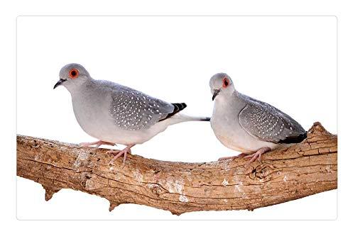 Tree26 Indoor Floor Rug/Mat (23.6 x 15.7 Inch) - Mourning Doves Diamond Turtledoves Birds Bird