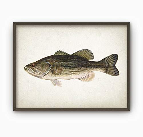 Largemouth Bass Fish Print Freshwater Fish Print Gamefish Wall Art Large Mouth Bass Fishing Angling Gift Idea