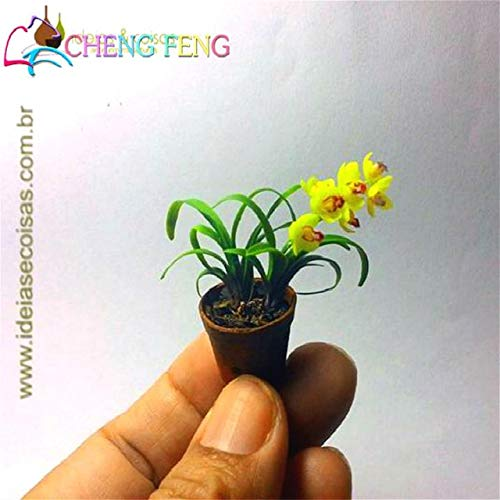 Green Seeds Co. 100 Unids Mini Bonsai Orquídea bonsai Interior de ...