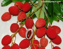 Fresh Lychees (2lb) by Tropical Importers (Image #3)