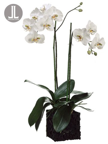 31'' Phalaenopsis Orchid Plant in Polyresin Container White Green