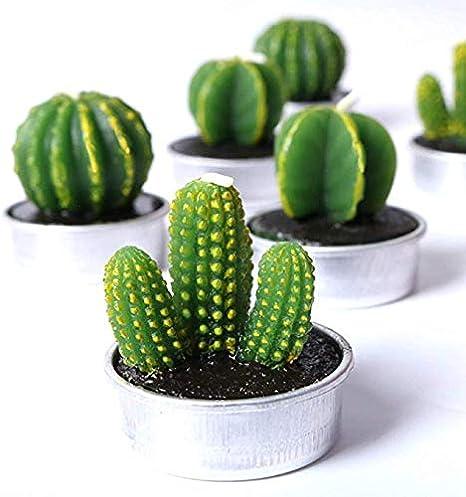 Frmarche 6 Velas de té Verde para Plantas de Postre en Forma de Cactus, para San Valentín, Fiestas, Bodas, decoración del hogar o Regalos