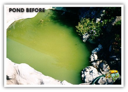 Aquaplancton - Safe for Fish and Pets all Natural Pond Algae Treatment Avoid Harsh Chemicals