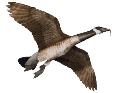 Jackite Inc. Canada Goose Flying Goose Decoy