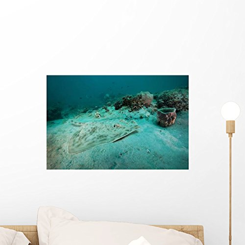 Southern Stingray Sandy Bottom Wall Mural by Wallmonkeys Peel and Stick Graphic (18 in W x 12 in H) WM58900 Southern Stingray Dasyatis Americana