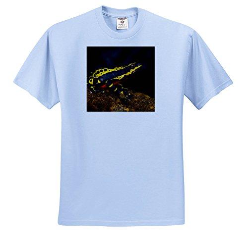 3dRose Danita Delimont - Frogs - Lemon Harlequin Frog, Amazon Region, Ecuador. - T-Shirts - Toddler Light-Blue-T-Shirt (2T) (Harlequin Three Light)