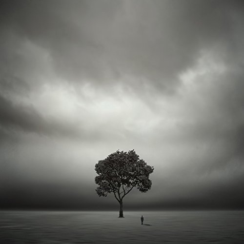 About A Tree (12×12 in) (Limited Edition on Canvas) by Philip McKay