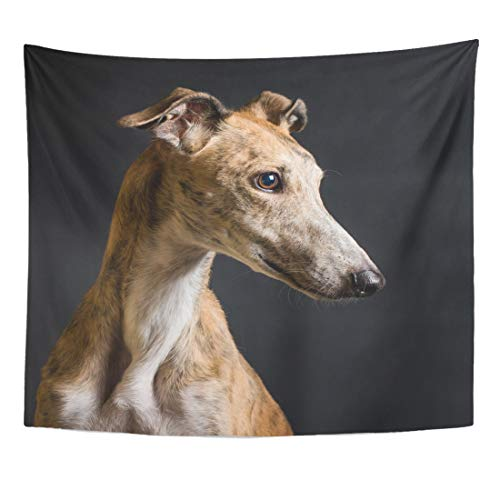 Tapestry Greyhound - Semtomn Tapestry Dog Black Adopted Spanish Greyhound Portrait in Studio White Home Decor Wall Hanging for Living Room Bedroom Dorm 60x80 Inches