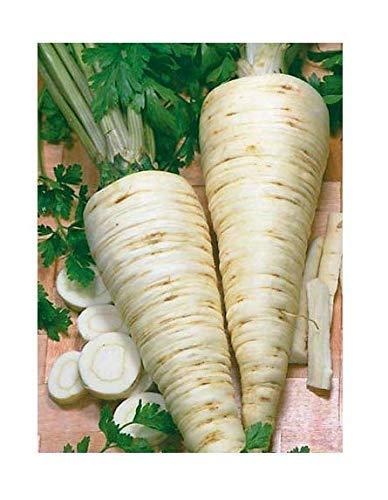Parsley Root - Seeds Organic herb Parsley Root Berlin from Ukraine 2 Grams