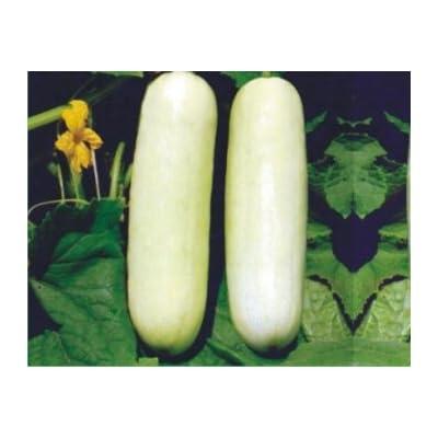 Cucumber White Long Seeds (avg 50-100) Seeds 3 : Garden & Outdoor