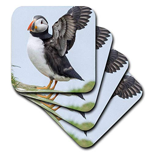 3dRose Danita Delimont - Puffins - Atlantic Puffin On Mykines, Faroe Islands, Denmark. - set of 4 Coasters - Soft (cst_313093_1)