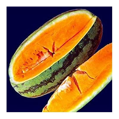 Shopvise Orangeglo Watermelon 20 Seeds Sugary, Delicious, and Crisp : Garden & Outdoor
