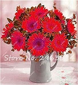 Zoomy Far 11: 20 piezas de venta caliente Pasar Semillas Semillas orgánicas semillas comestibles para jardinería Flores Mini Bonsai 11