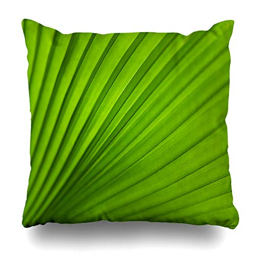 Ahawoso Throw Pillow Cover Thailand Macro Green Palm Tree Leaf Nature Abstract Closeup Asia Botany Climate Design Home Decor Pillow Case Square Size 20x20 Inches Zippered Pillowcase