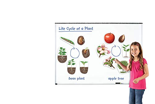 The Life Cycle Of A Plant (Learning Resources Giant Magnetic Plant Life)