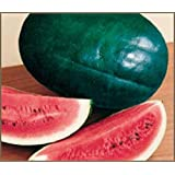 Black Diamond Watermelon Seeds (25 Seeds)