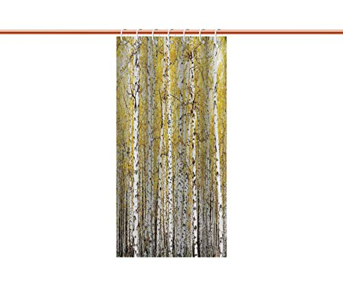 iPrint American Shower Curtain [ Farm House Decor,Autumn Birch Forest Golden Leaves Woodland October Seasonal Nature Picture,Yellow Grey ] Decorative Curtain Ideas