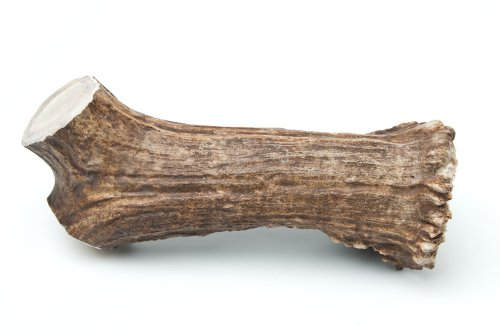 Chasing Our Tails Moose Rack Snack, 100-Percent Naturally Shed Moose Antler Chew, X-Large, 11-14-Inch Review
