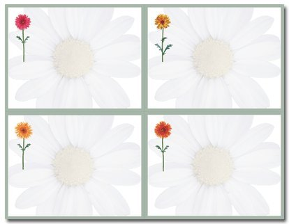 (Price/Pack)Masterpiece Studios 919598 Daisies 4 Up ()