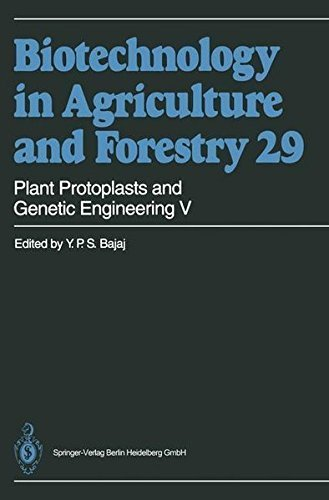 Plant Protoplasts and Genetic Engineering V: 005 (Biotechnology in Agriculture and Forestry) Pdf
