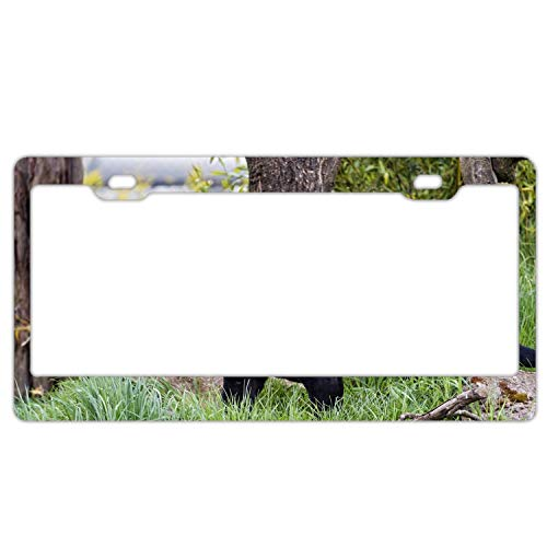 Sbfhdy 3D Black Panther Metal License Plate Frame Tag Holder with Screw Cap Covers ()