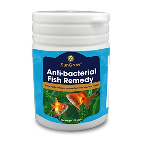 Sungrow antibacterial fish remedy healthier happier for Fish pop eye