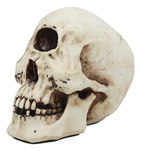 Ebros Greek Mythology Primordial Giant Cyclops Skull Statue 6.75