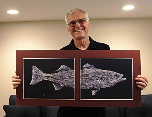 Large Size GYOTAKU fish Rubbing Two Striped Bass Art Prints (head & tail) 11