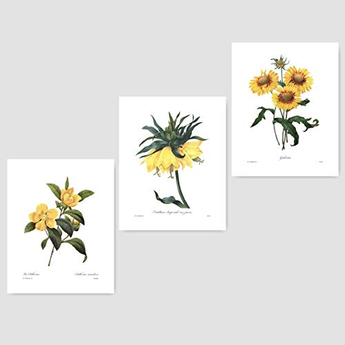 Berkshire Imperial - (Set of 3) Yellow Flower Art (Redoute Prints, Botanical Wall Decor) Dillenia, Sunflower Crown Imperial – Unframed