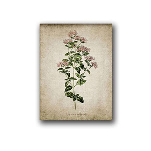 violet flower Vintage Herb Art Canvas Poster and Prints, Oregano Rosemary Sage Thyme Canvas Painting Retro Wall Pictures Home Art Wall Decor,A5 15x21 cm No Frame,PH121 ()