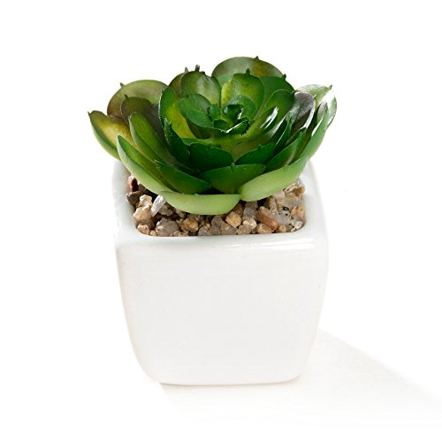 Nattol Small Artificial Succulent Plant Potted in White Ceramic Pots for Home Decor, Set of 4 5