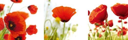 Цвет: маковое поле